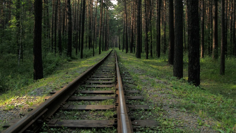 To the forest by train